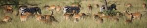 Reservation safari a la carte a la journee avec Objectif Tanzania - Trekking Safari prive de luxe sur mesure en Tanzanie