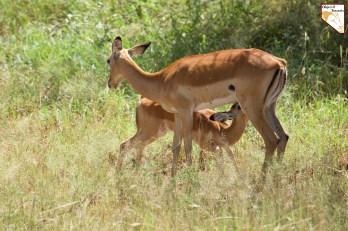 Contactez Objectif Tanzania - Safari prive de luxe sur mesure en Tanzanie
