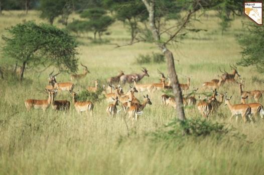 Decouverte de la faune tanzanienne - Choisir la Tanzanie pour un safari prive de luxe sur mesure avec Objectif Tanzania