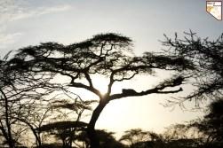 Quand partir en Tanzanie pour un safari prive de luxe sur mesure avec Objectif Tanzania