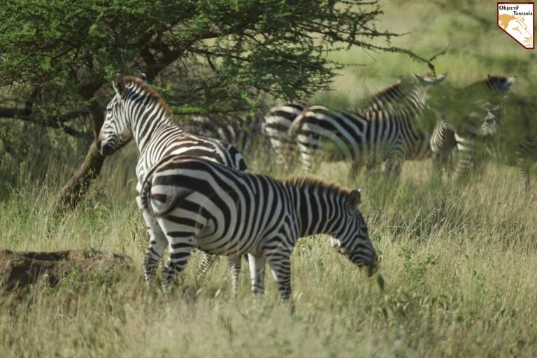 Objectif Tanzania agence spécialisée uniquement dans les safaris en Tanzanie