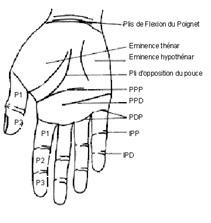 Schéma de la main