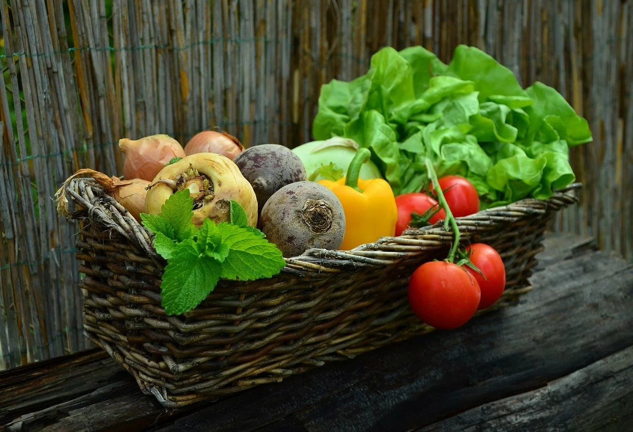 legumes du jardin bio