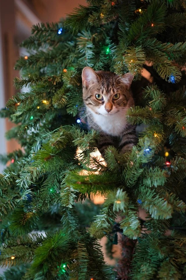 Bucket List de Noel - Chat dans sapin