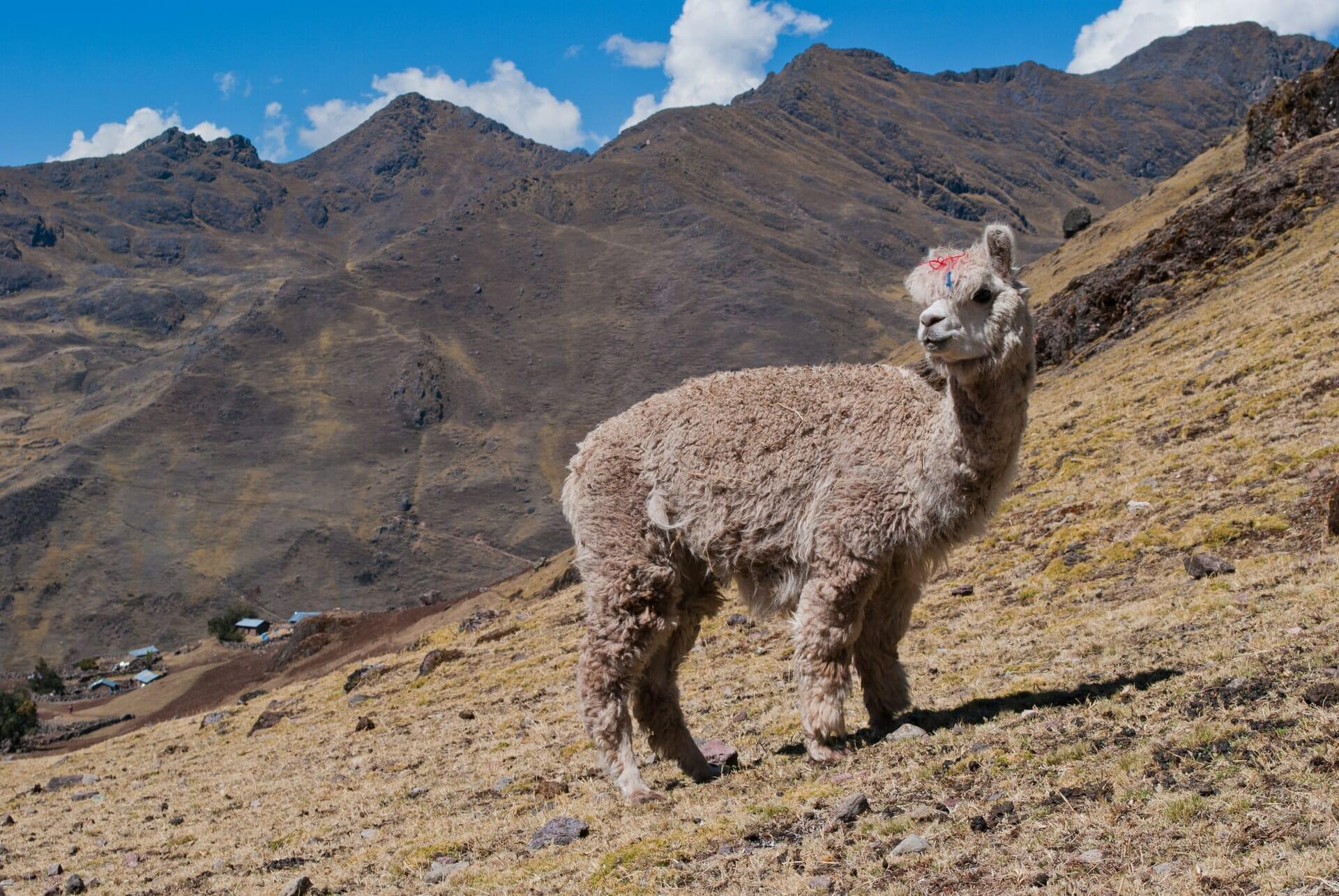Bucket List Pérou