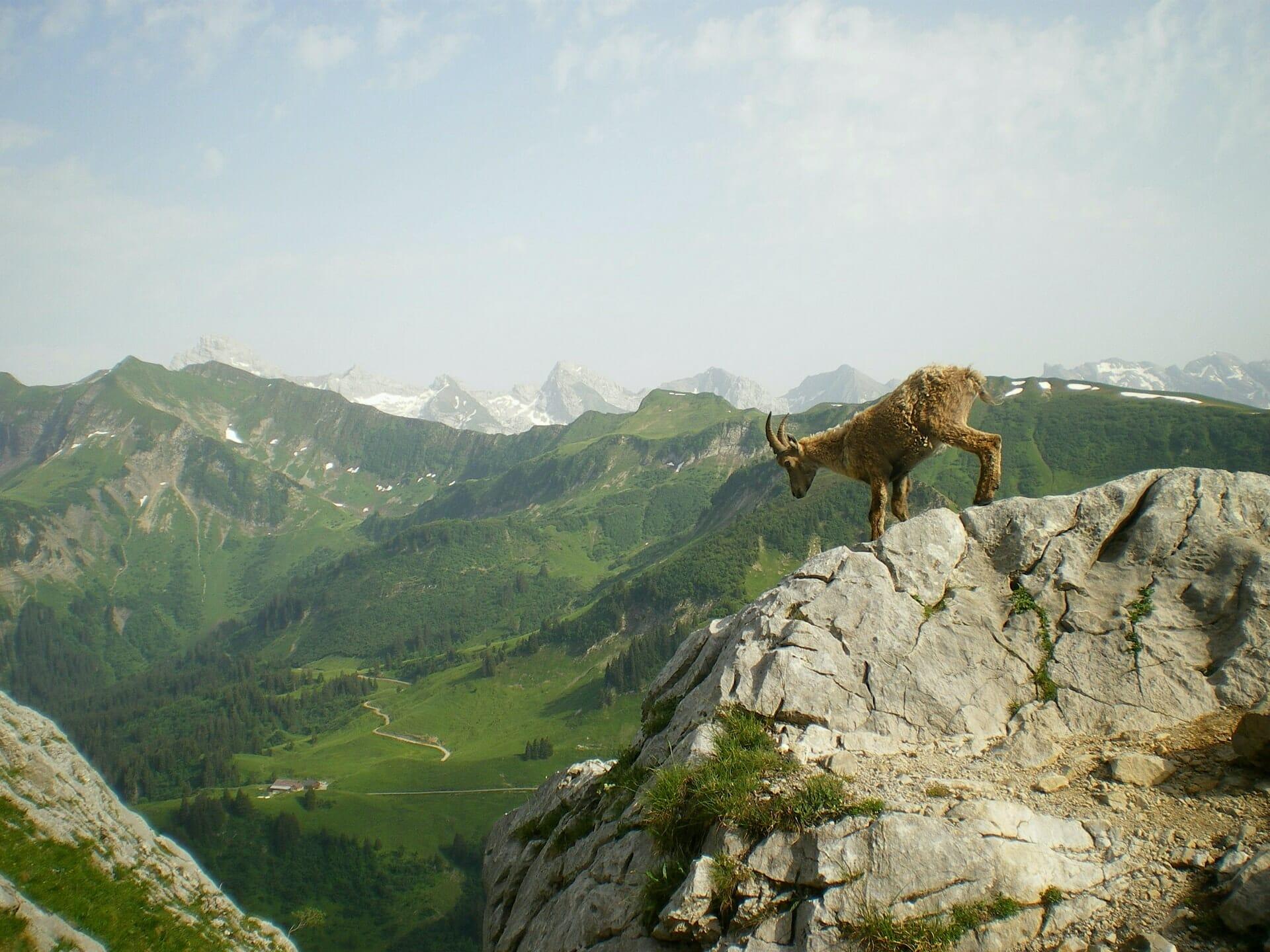 Chamoix Alpes france