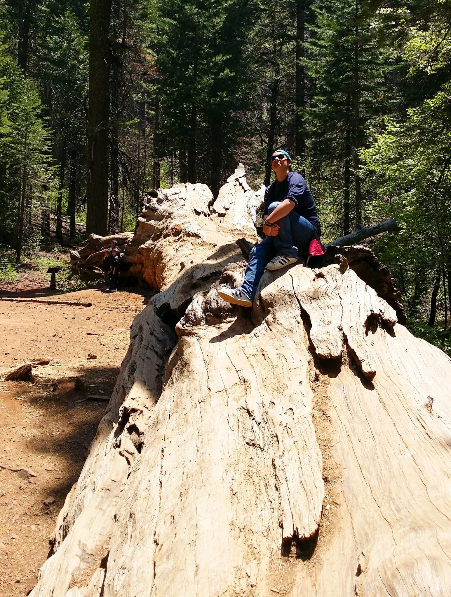 Virgo Sequoia geant