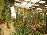 cactus saint astier pinlou (167)