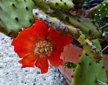 cactus saint astier pinlou (38)
