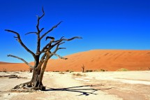 namibie j8 d+®sert namib (448)