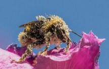 nectare