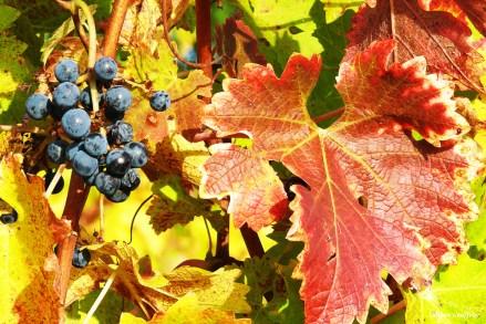 automne 2009 (66)