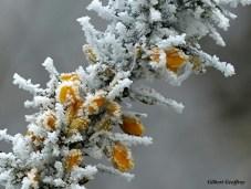 gravelynes2012015 (53)