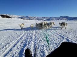 dogsledding11