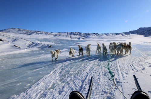 dogsledding14