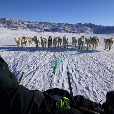 dogsledding5