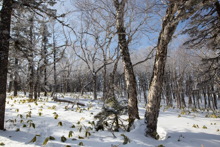 Akan National Park_Hokkaido_Japan_5