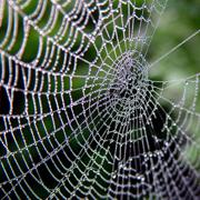 Spider_Web-web