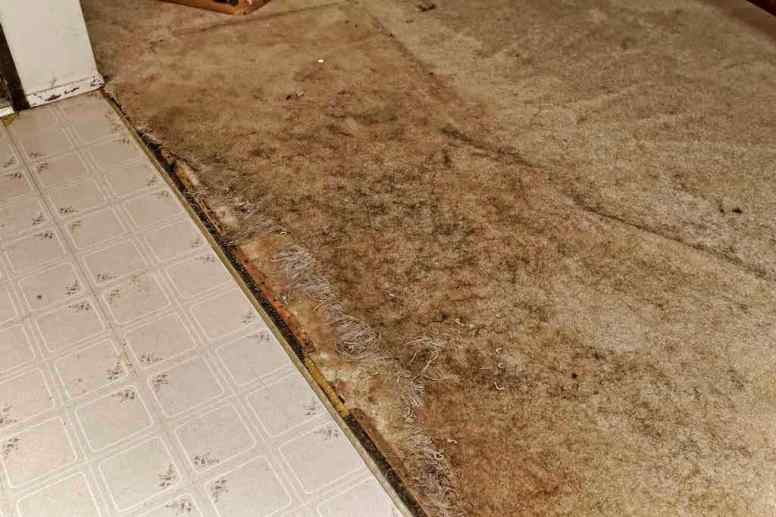 Entry Carpet Damage