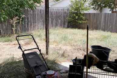 Overgrown Back Yard