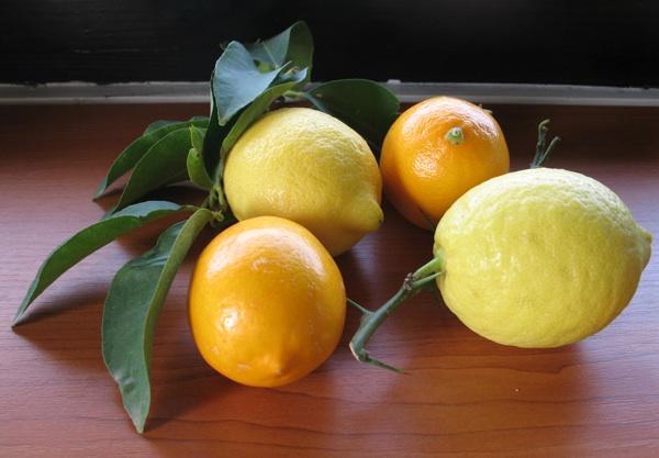 Narančasti poput naranče i, dakako, limunasto žuti (Snimila Božica Brkan / Acumen)