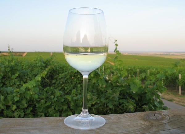 Čaša jedne od beljskih graševina s pogledom na vinograde s Vidikovca (Snimila Božica Brkan / Acumen)