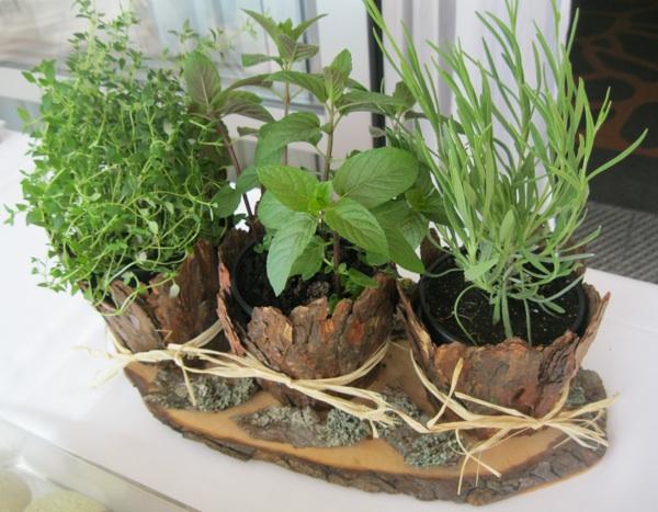 Tri vrste začinskoga bilja s kojim su začinjeni kolačići: timijan, čokomenta i lavanda (Snimio Miljenko Brezak / Oblizeki)