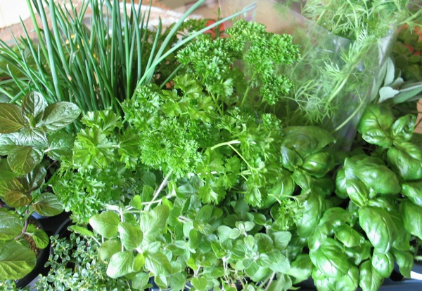 Koliko vrsta začinskoga bilja koristite uobičajeno? (Snimila Božica Brkan / Oblizeki)