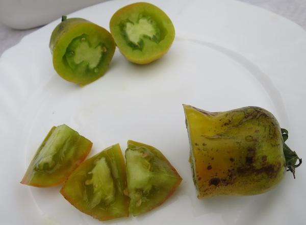 Sorta Green Pepper (Fotografija Miljenko Brezak / Oblizeki)