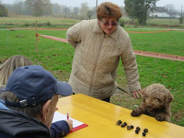 Predaja ulova za ocjenjivačkim stolom (Fotografija Božica Brkan / Oblizeki)