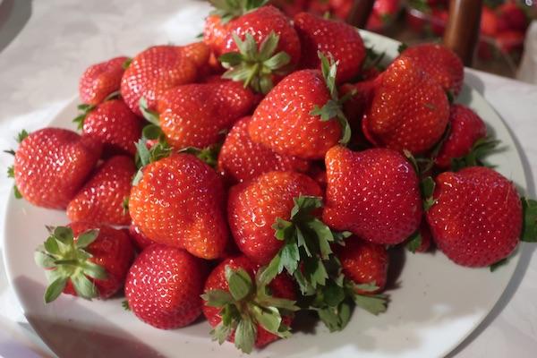 Sorta raurica najbolje je ocijenjena od 16 sorta jagoda 2018. (Fotografija Miljenko Brezak / Oblizeki)