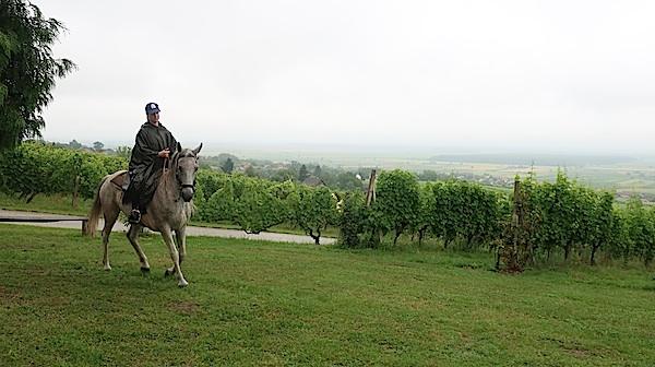 Pogled s popovačkih vinograda na Lonjsko polje (Fotografija Miljenko Brezak / Oblizeki)