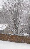 snowtrees2
