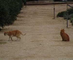 Los mismos gatos, no tan separados