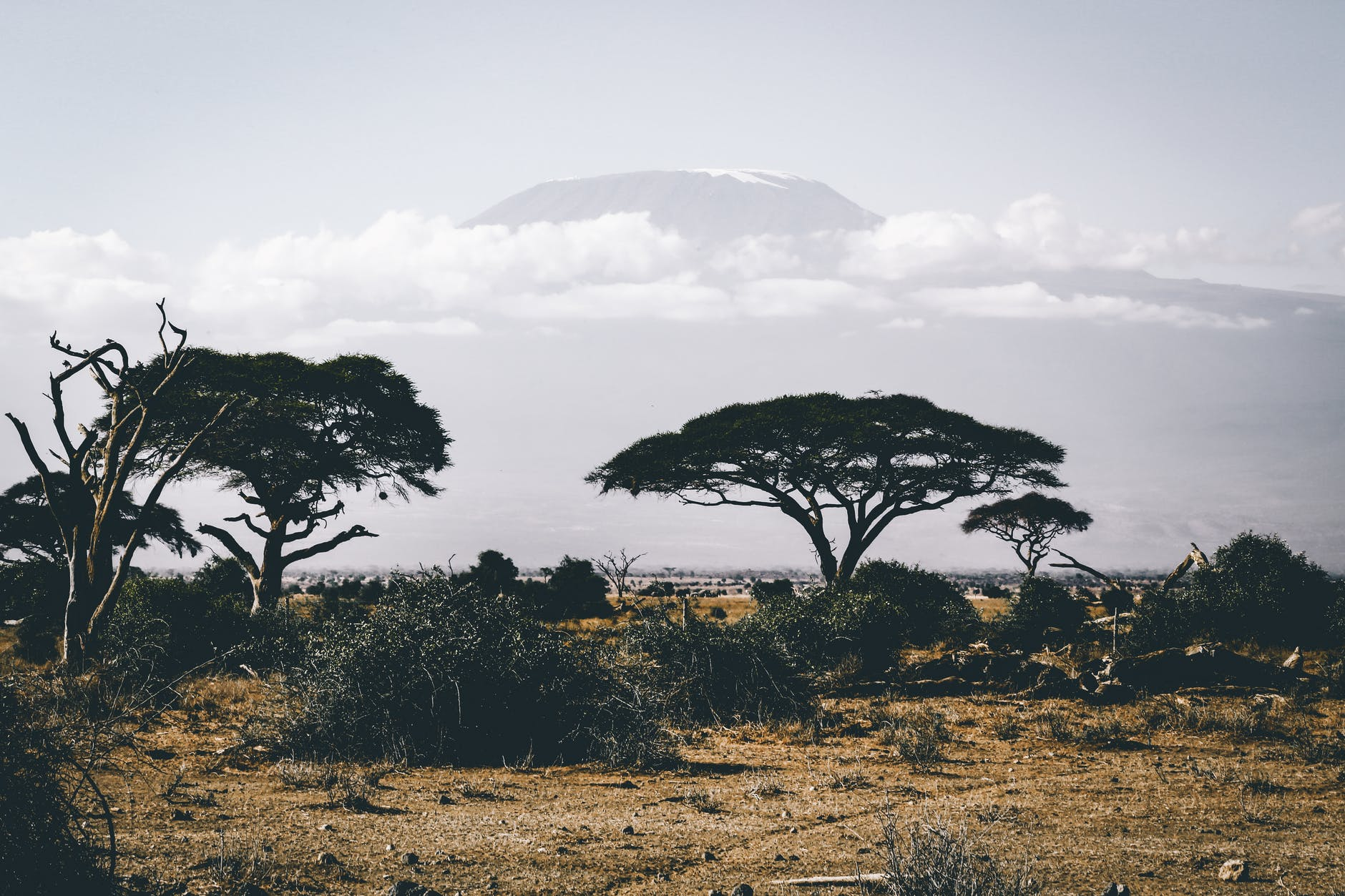 landscape photography of wild trees over mountain