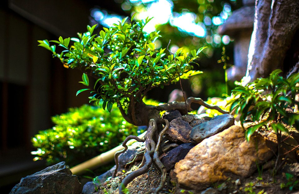 Bonsai - A Small Japanese Objets d'Art