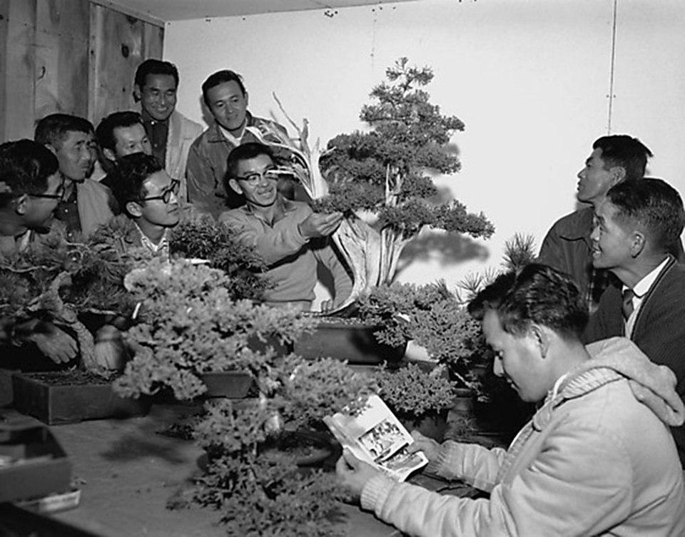 John Naka ensinando a arte do bonsai em sua casa, California, Novembro de 1962