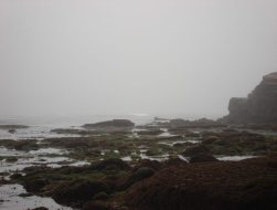 A view of the Pacific Ocean shrouded in morning fog.