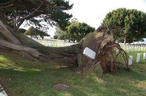 Tree fell Ft Rosecrans 12-15-09
