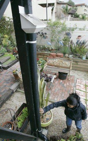 rainwater pt loman 02