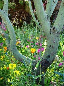 Tucson Flowers in Spring