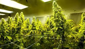 Prop 19 plants