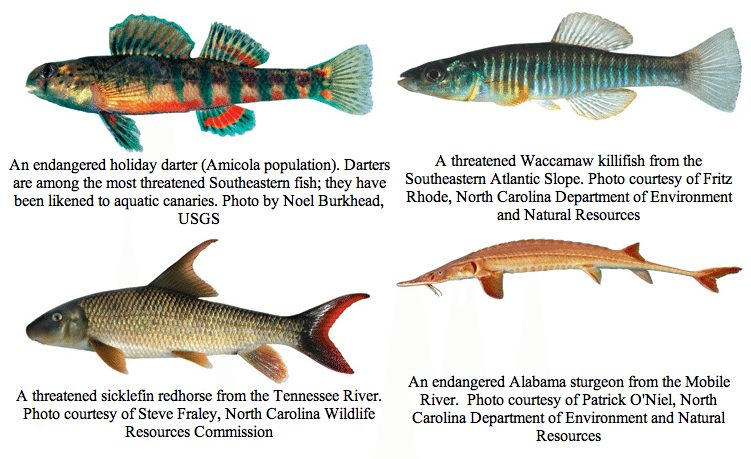 Was the election good for the fish for Freshwater fish representative species