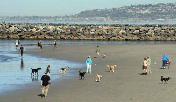 dog beach OB