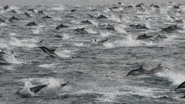 dolphins 1000s 2-14-13 insd