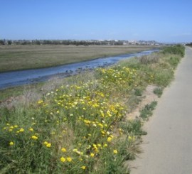 Mission Bay BikeRide 1Q flowers river