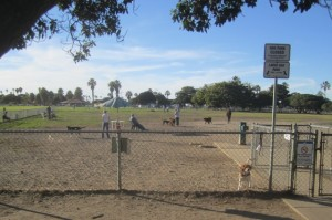 Dusty Rhodes Dog park