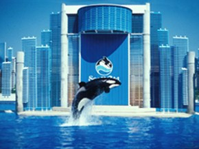 SeaWorld jump orca
