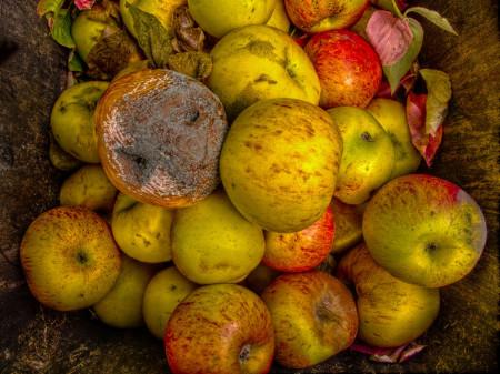 bad apple in barrel