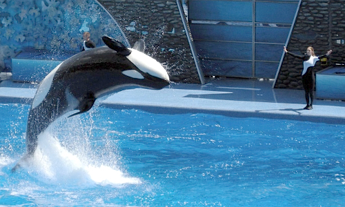orca Orlando Fl